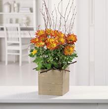 Woodland Mums Planter